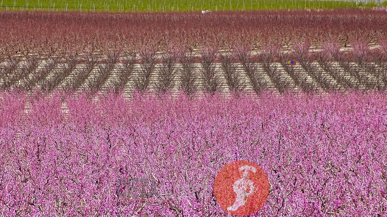 Floracion02_16x9