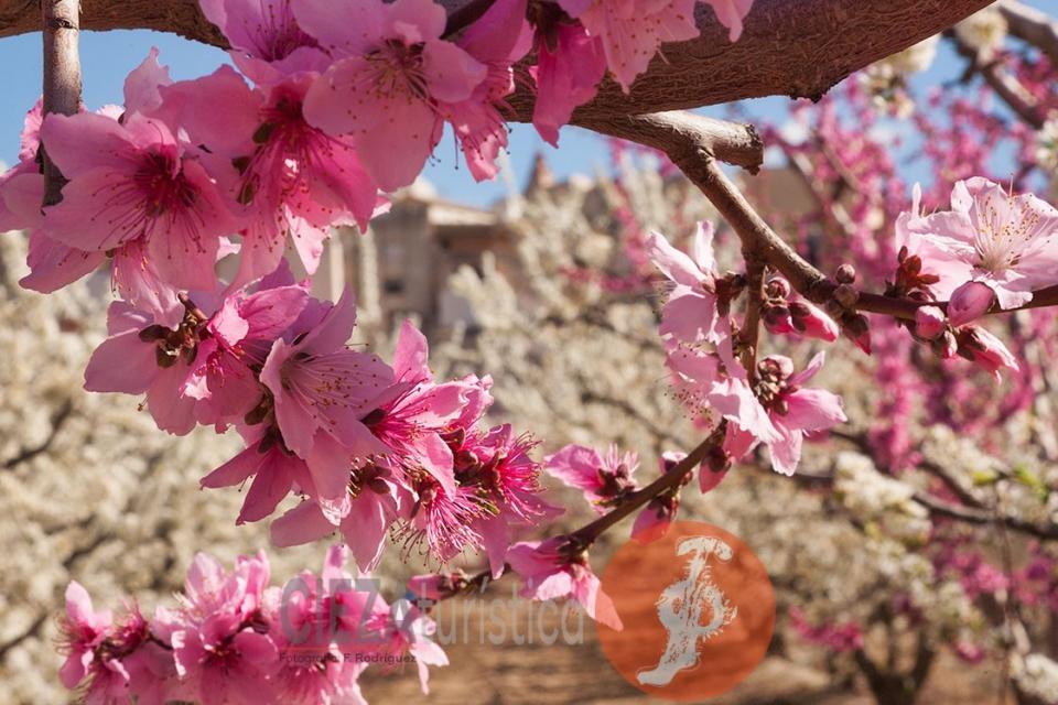 Floracion_16x9